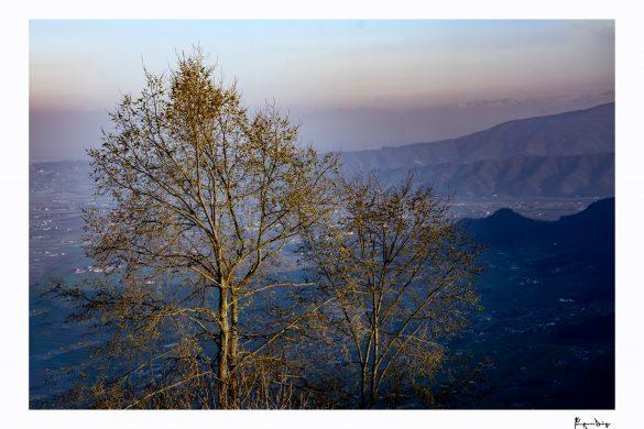 L'albero & il Cielo