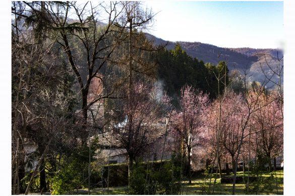 alberi & colline