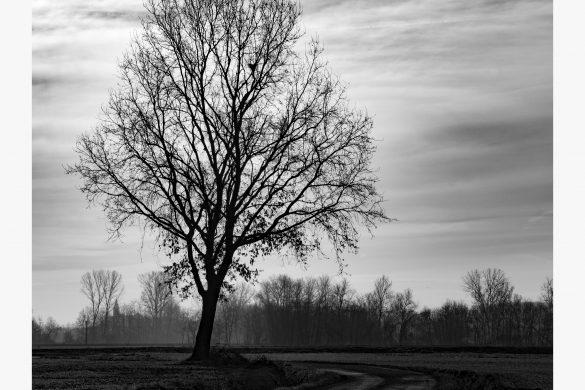 La via dell'albero