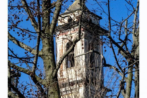 l'albero & il campanile