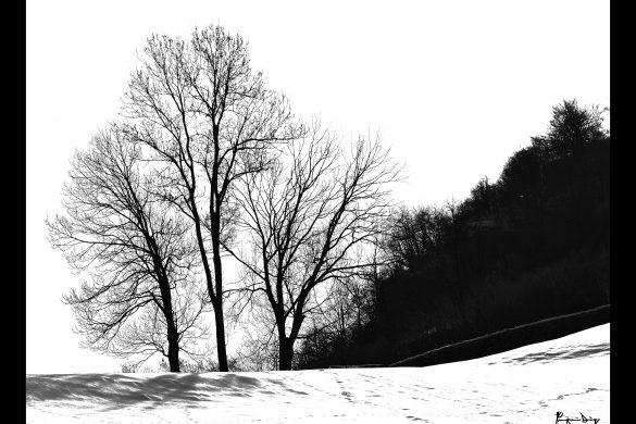 Alberi & Neve
